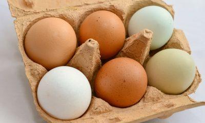 takie zwykłe jajko