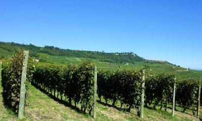 Barolo winnica Piemont
