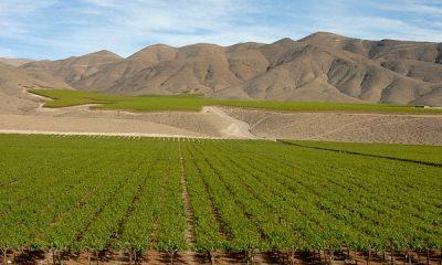 Winnica w Chile