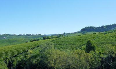 winnica Piemont