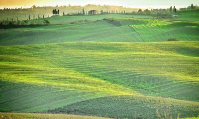 Widok na Chianti