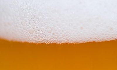 piwo lager