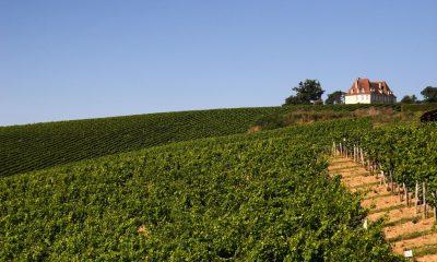 Winnica w Madiran