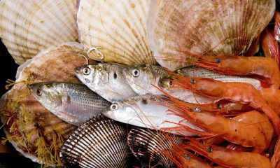 ochrona bioróżnorodności mórz i oceanów
