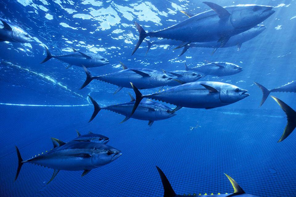 przyłów ryb, czyli łapanie przypadkowych gatunków w sieć