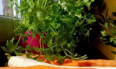 Bulionetka warzywna, domowa kostka warzywna